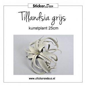 Tillandsia grijs 25cm kunst